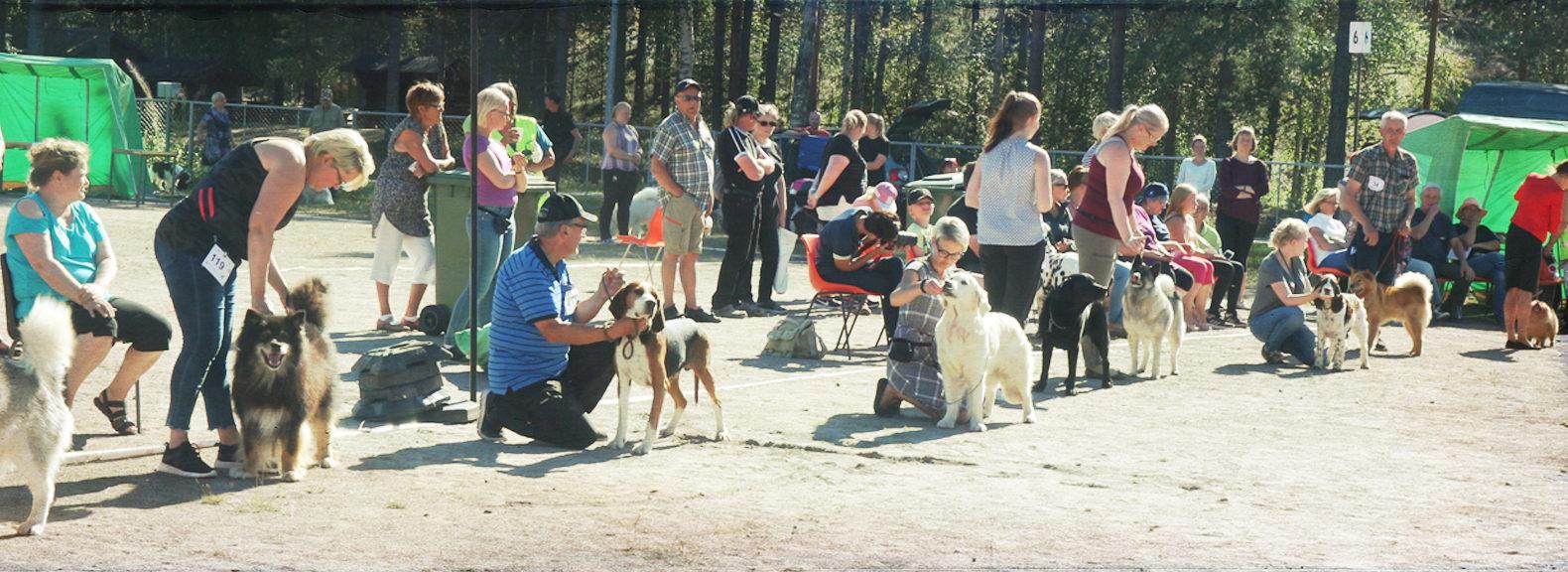 Koiranäyttelyt Kainuussa